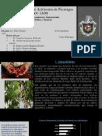 CULTIVOS PERMANENTES-PECUARIA.pptx
