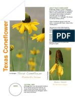 Texas Coneflower Species Description Page