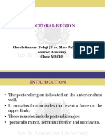 Anterior Pectoral region.pdf