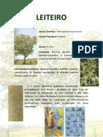 LEITEIRO