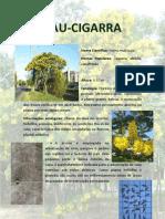 PAU-CIGARRA