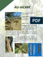 PAU-JACARÉ