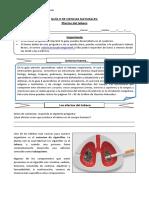5°-básico-Ciencias-Naturales-Guía-9-Valeria-Bravo