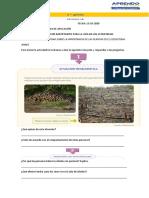 Las-plantas-son-importantes-para-la-vida-en-los-ecosistemas-doc (1)