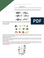 tipos de macroevolución y enfermedades.docx