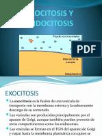 EXOCITOSIS.pptx