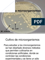 Cultivo de microorganismos