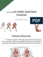 Sistema muscular.pdf