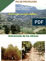 PCEP.Protección.8 set.. 2020-I.pdf