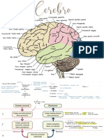 Neuro- fisio