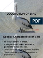 Locomotion of Bird