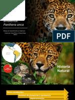 Enriquecimiento ambiental.pptx