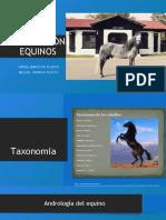 AA REPRODUCCION EQUINOS Terminada (1).pptx