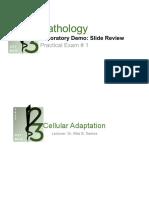 REVISED.PAT.1.SLIDE-REVIEW.pdf