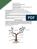 Clasificación sistemática de la vid ( guía y práctico nº 5 ) 4to 1ra  y 4to 2da