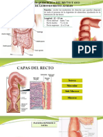 RECTO-ANO-FISURA-PROLAPSO-ABSCESO- FISTULA-HEMORROIDE-TRAUMATISMO RECTAL