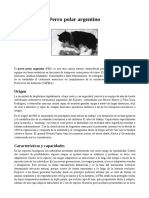 Perro polar argentino