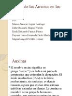 Efecto de las Auxinas en las plantas.pptx