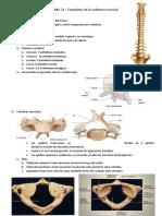 TEMA 22 - Esqueleto de la columna cervical