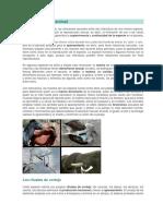REPRODUCCION EN LOS SERES VIVOS2 8°03 IEFHB 2020 (1)