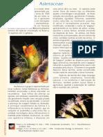 PFRD_1999_Asteraceae