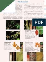 PFRD_1999_Araliaceae