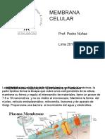 Membrana Plasmática- Fisiologia