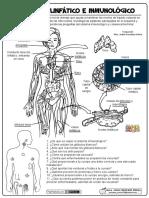 02-El-Sistema-Linfático-e-Inmunológico.pdf