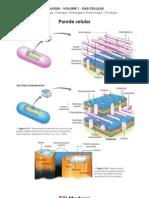 Biologia - Volume 01 - Das Células 04 Parede celular I