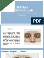 Orbita y globo ocular