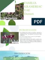 Familia Kramericaceae