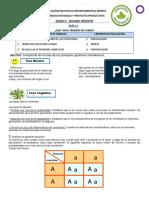 Guía 4 Grado 9 CNYPP