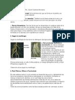 Morfologia vegetal externa