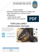 ECOLOGIA- TORTUGA CAREY