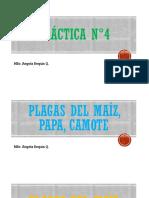 PLAGAS DEL MAIZ, PAPA y CAMOTE.pdf