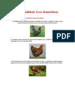 Especialidad Aves domésticas