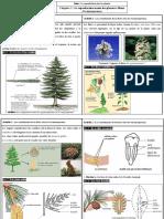 Chapitre - 1  La reproduction sexuée des plantes à fleurs  (Gymnospermes)
