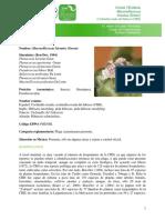 Ficha_T_cnica_Cochinilla_Rosada.pdf