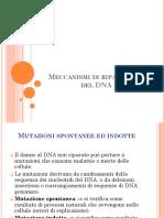 MECCANISMI DI RIPARAZIONE DEL DNA