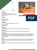 Madagaskar Riedfrosch