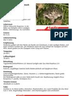 Marmorierter Ferckelfrosch