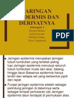 epidermis dan derivatnya