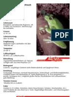 Neuguinea-Riesenlaubfrosch