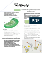 Resumo Fotossíntese.pdf