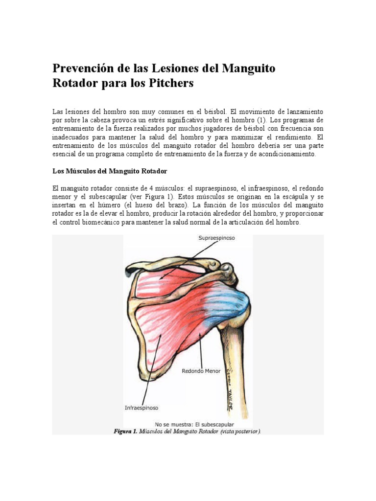 Hermosa Anatomía Del Hombro Y Del Manguito Rotador Viñeta - Anatomía ...