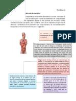Conceptualización y clasificación de los alimentos