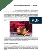 Neuro B 2019 - Parcial 2 - Plasticidad Sinaptica