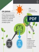 resumo ciencias fotossintesse.pdf