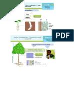 Trocas nutricionais plantas.docx