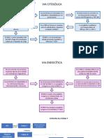 Inmuno presentacion de antigenos.pptx